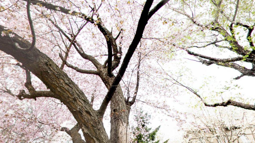 Screenshot 2020 05 22 at 17.58.28 1024x574 - 360°VRでお花見?日経VRアプリで桜の名所を眺める?!